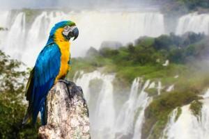 A Parrot at Iguazu Falls