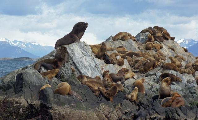 sea lion island