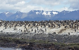 Penguins on an Island