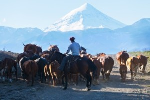 A Gaucho in Patagonia