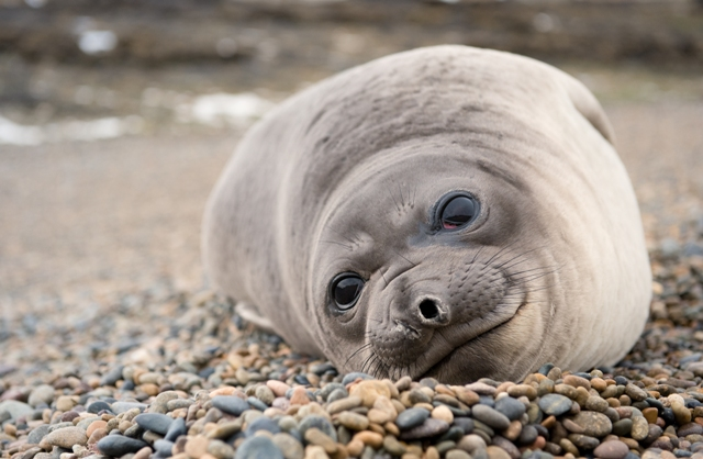 A seal on a Beach