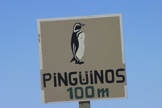 penguin sign valdes peninsula