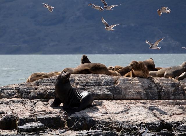 ushuaia sea lions