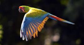 Bird watching in Salta