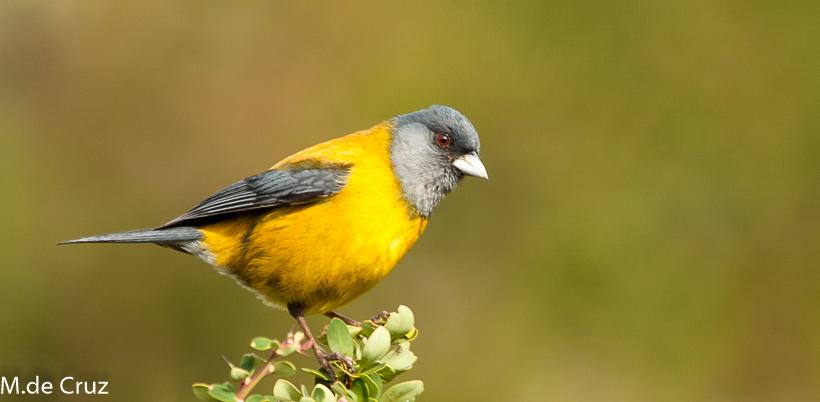 birdwatching argentina